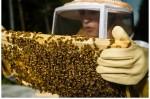 Best Bees