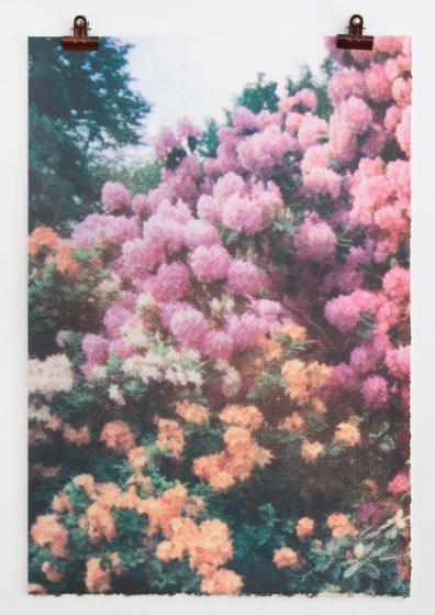 Pink_Orange_Flowers