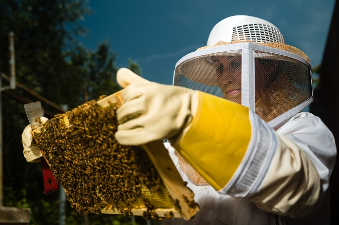 July 18, 2013 - Best Bees - 028